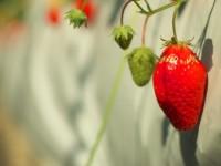 春の味覚、収穫の頃合