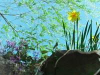 夏の芽吹き