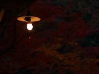 暗がり渓谷