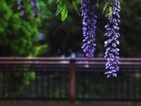 春の雨の中で