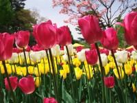 春風の合唱