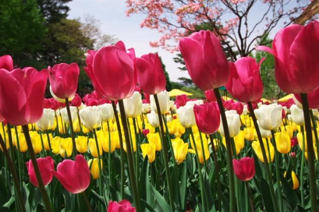 春風の合唱隊