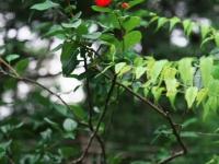 木々と椿と