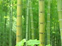 竹を目指して
