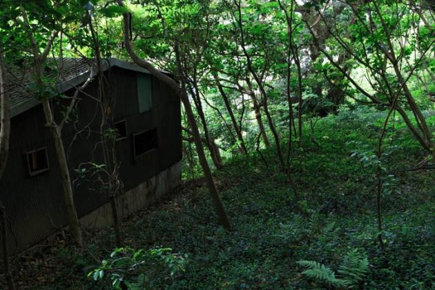 森の隠れ場