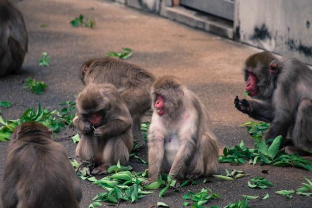 猿山の昼食