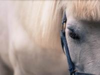 馬界のプリンス