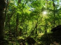 癒やしの森へ