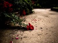 咲ける喜び