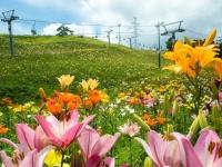 百合の咲く丘に