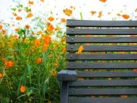 花の特等席