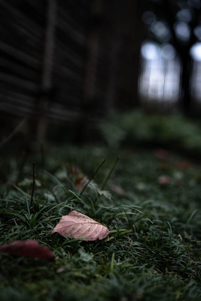 枯れた葉の到着点