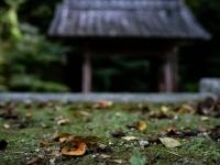 山門の秋風