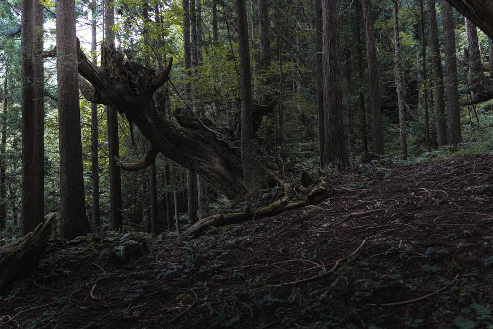 森の奥へと