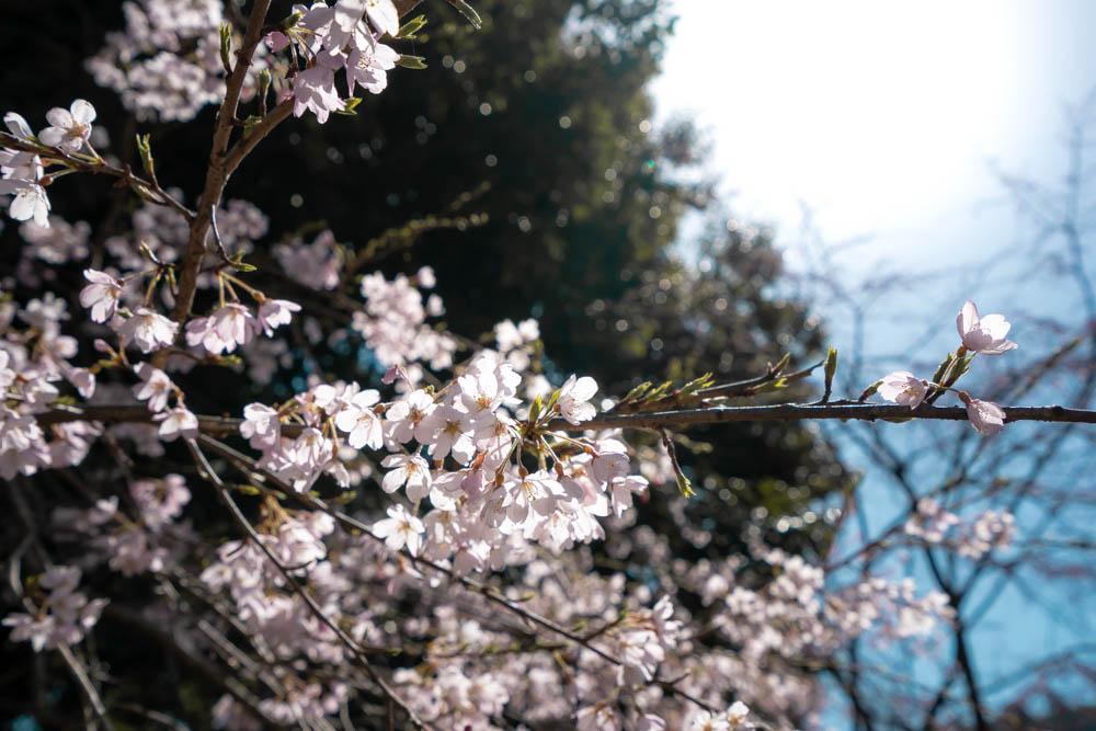 春の導き手