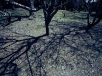 大地に広がる木々