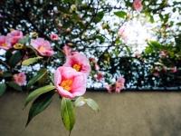 花がほころぶ季節