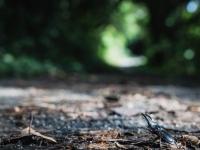 森への道での出会い