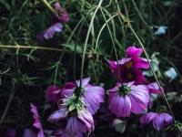 そこに咲く花