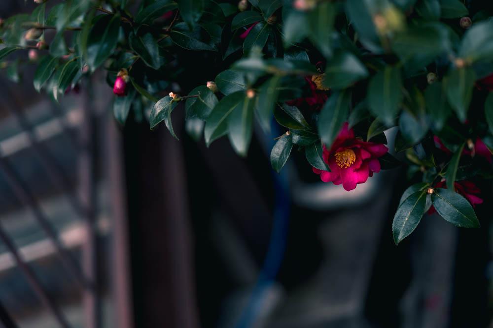 目を奪う花