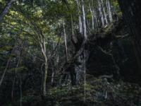 深い森の中で