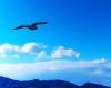 明日への飛翔