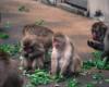 猿山のお昼