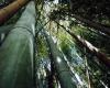 竹林の狭間で